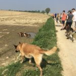 Berger belge, Berger allemand et deux petits chiens