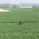 Joli croisé courant dans les champs