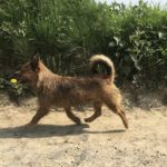 Petit chien qui trottine sur un chemin