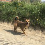 Petit chien qui halète sur un chemin