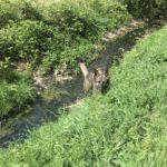 Berger allemand le long d'un cours d'eau