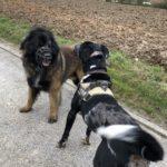 Balade canine organisée par Julie Willems, comportementaliste pour chien