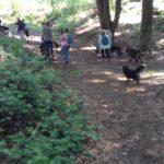 Chiens qui courent dans les bois