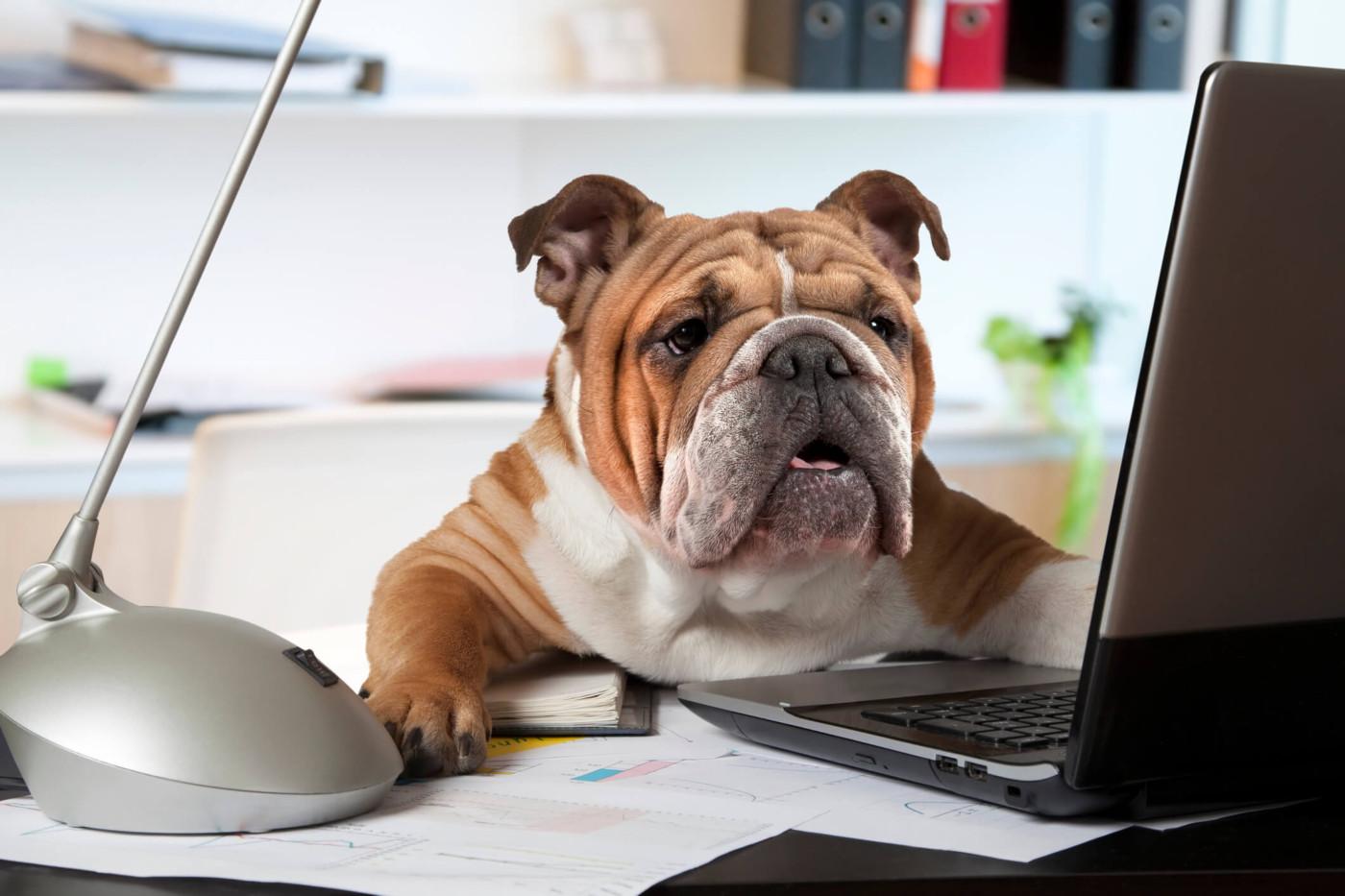 prendre son chien au bureau