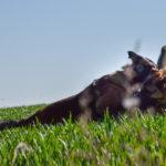 Interaction entre deux chiens