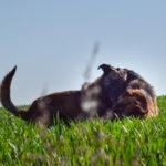 Jeux entre deux chiens