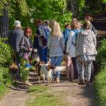 Berger des shetland et épagneul derrière un groupe de promeneurs