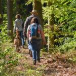 Randonnée canine dans une forêt