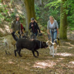 Labrador retriever, Bullmastiff et Berger allemand