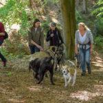 Bullmastiff avec un berger allemand, un labrador et un croisé beagle