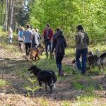 Berger allemand avec Border-collie et d'autres chiens en balade