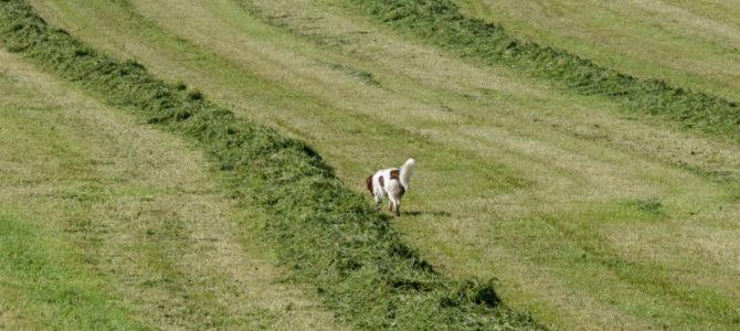 Notre première balade canine du samedi 5 mai
