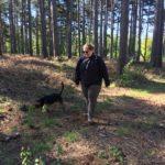Beagle en exploration dans une sapinière