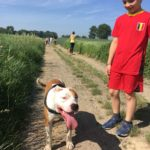 Staffordshire-terrier-américain