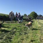Akita, épagneul, beagle et berger suisse