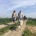 Chien-loup tchèque qui marche devant ses maitres