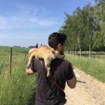 Bouledogue sur les épaules de son maître