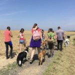Border collie, malinois, berger australien et leur maitre