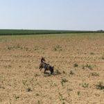 Petit chien qui s'amuse dans un champ