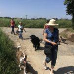 Balade canine avec lunettes de soleil et chapeau