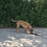 Petit chien explorant un trou