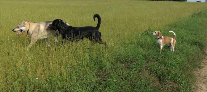 Photos de notre première balade canine de ce samedi 16 juin