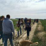 Randonnée en campagne avec les chiens