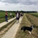Border-collie qui observe les randonneurs