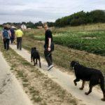Promeneurs avec leur chien