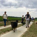 Berger allemand trempé suivi d'un Sharpei, d'un Chien-loup et d'un Bulldog