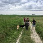 Chiens, promeneurs et vaches