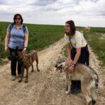 Câlins pour un Malinois et un Chien-loup
