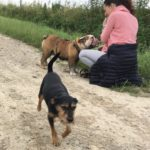 Bulldog anglais et un petit Griffon
