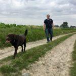 Labrador retriever suivi de son maître