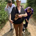 Petit beagle dans les bras de sa maitresse