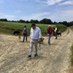 Marche estivale entre maîtres et chiens