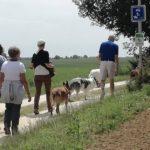 Berger belge malinois marchant au pied de sa maîtresse