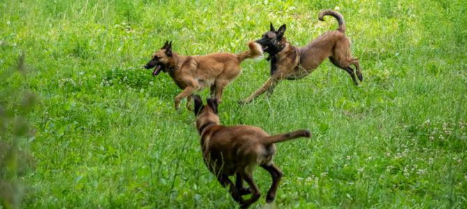 Notre deuxième balade canine de ce samedi 7 juillet
