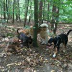 Groupe de chiens s'amusant dans les bois