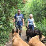 Deux Bergers malinois avec un Labrador retriever dans les bois