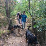 Rottweiler se baladant près de jardins bordant la forêt
