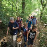 Akita et Malinois en balade familiale dans les bois