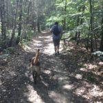 Malinois se promenant parmi les arbres