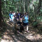 Malinois et Labrador se baladant gaiement dans la forêt