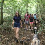 Promenade estivale avec les chiens dans la forêt