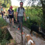 Rottweiler et Bull-terrier sur un pont