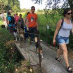 Beagle, Malinois et Border-collie traversant un pont