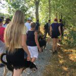 Randonnée canine sur un long chemin arboré