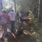 Rottweiler, Berger australien et leur maître sur un beau chemin arboré