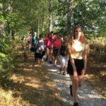 Très beau chemin forestier pour une promenade canine